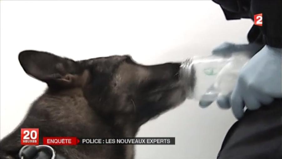 Pourquoi vous ne regarderez plus le nez de votre chien comme avant ?